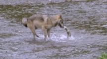 Alaska Animal Stock Footage