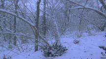 Snow, Storm Mo.