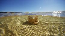 Sea Shells Underwater In The Surf Off Double Island, Australia