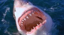 See Sharks Browse Page