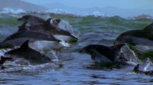 Dolphins Ride Waves, Slow Motion