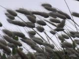 Grass Is Blowing In The Wind