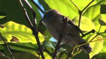 A Bird Forages In A Bush