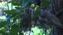 A Small Bird Works On Its Hanging Nest