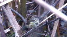 A Small Bird On Reed Flies Off