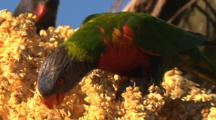 Bird Stock Footage