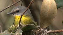 A Robin Brings Nesting Material And Starts Building, Before Flying Off