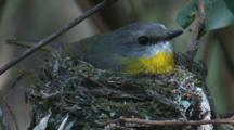 A Robin Has A Rest In Its Newly Built Nest