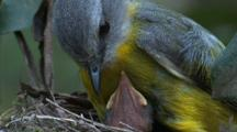 A Robing Looks Very Concerned At Its Only Remaining Chick In The Nest