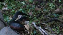 A Black Snake Slides Away