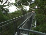 Treetop Walk At The Valley Of The Giants