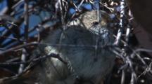 A Juvenile Bird Sits Perched In The Scrub