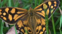 A Butterfly Pauses For A Moment On Grass