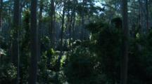 Spotted Gum Forest With Shrubby Understory Adjacent To Rainforest