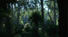 Spotted Gum Forest With Shrubby Understory