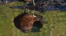 A Tilt Up From The Reflection Of A Duck In Water To The Preening Bird