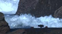 Oystercatchers Defy Heavy Seas In Their Search For Food
