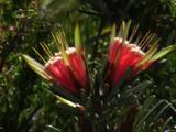 Heathland Flowers Abound In Spring