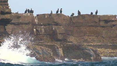 Cormorants take a break on a rocky outcrop