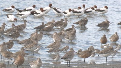 Many water birds gather on a beach