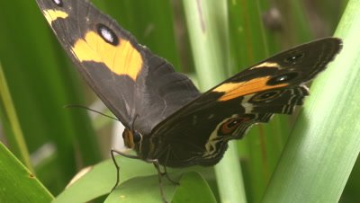 Close view of a butterfly perched on plants