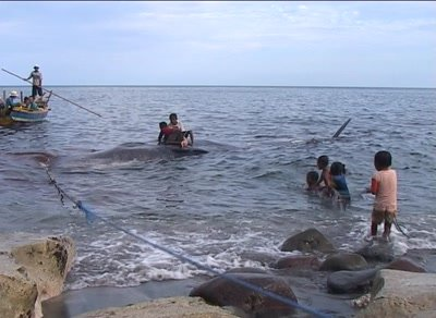 Lamalera whalehunting village kids playing around caught whales on the shore