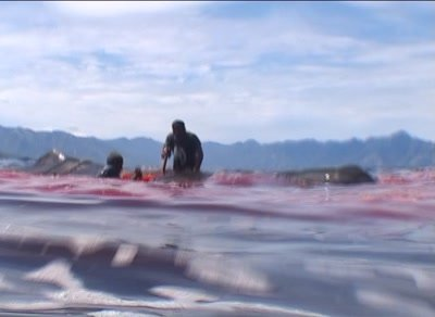 Whalehunters cutting wounds on spermwhale