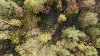 Flying over a wood