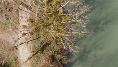 Flying over trees on a riverside