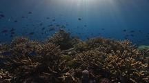 Shallow Tropical Pacific Coral Reef Lit By Sunbeams