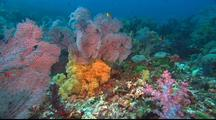 Coral Reef With Soft Corals, Sea Fans