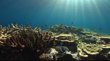 Coral Reef Lockoff With Sunbeams