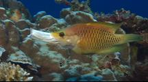 Stock Footage of Coral Reef Fish Species