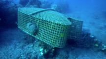 Fish Trap With Butterfly Fish Inside