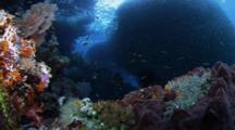 Spectacular School Of Sardines Undulate Over Reef