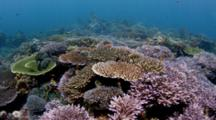 Track Over Beautiful Hard Corals