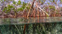 Half In Half Out Shot Of Mangroves, Cat Island