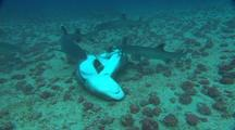 Stock Footage of Sharks Mating