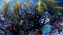 California Tide Pool