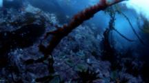 California Tide Pool underwater