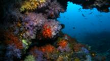 Beautiful Soft Coral Covered Ledge