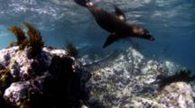 RED 4K Underwater Mammal Stock Footage