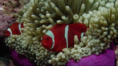 Bejeweled Fishes - Underwater Coral Reef Video Decor