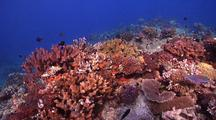 Swimover Across Very Healthy And Diverse Hard Coral Reef With Lots Of Fish And Coral.
