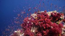 Swimover Shot Across Loads Of Colourful Fish And Hard And Soft Corals In Full Bloom.