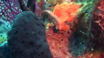 Fireworm Crawls On Sponge