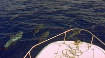 Spinner Dolphins Bowriding