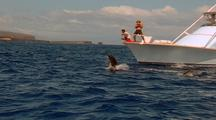 Spinner Dolphins Spins At Bow Of Boat