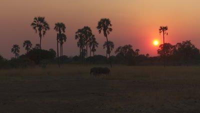 Sunset with Elephant