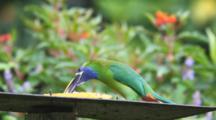 An Emerald Toucanet (Aulacorhynchus Prasinus) At A Feeding Station In Costa Rica
